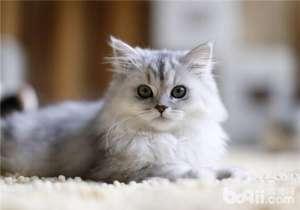 a_母猫产仔时需要注意什么-成猫饲养[新闻]
