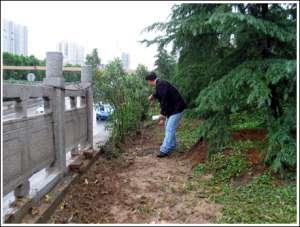 资讯生活小北门立交桥外绿化带160余株夹竹桃被连根拔走